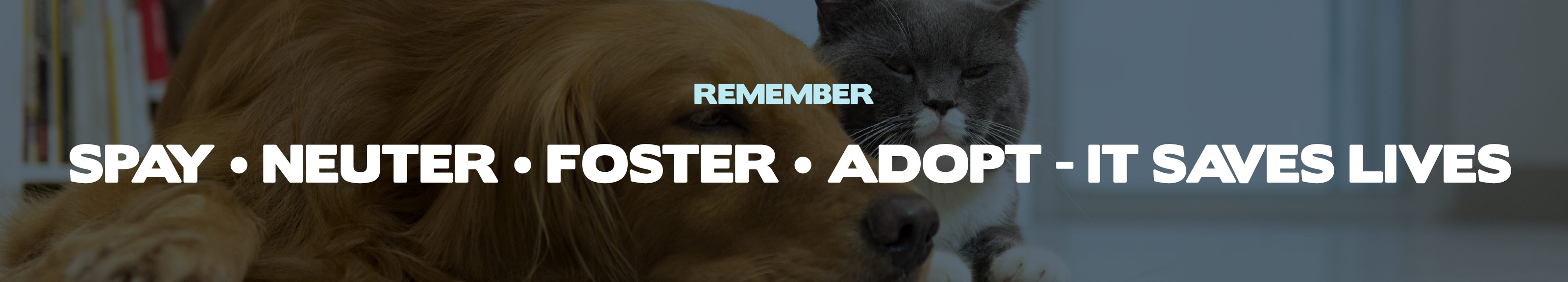 REMEMBER: SPAY • NEUTER • FOSTER • ADOPT - IT SAVES LIVES